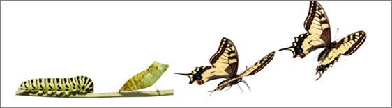 Image de la métamorphose d'une chenille