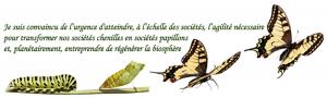 De sociétés chenilles à papillons